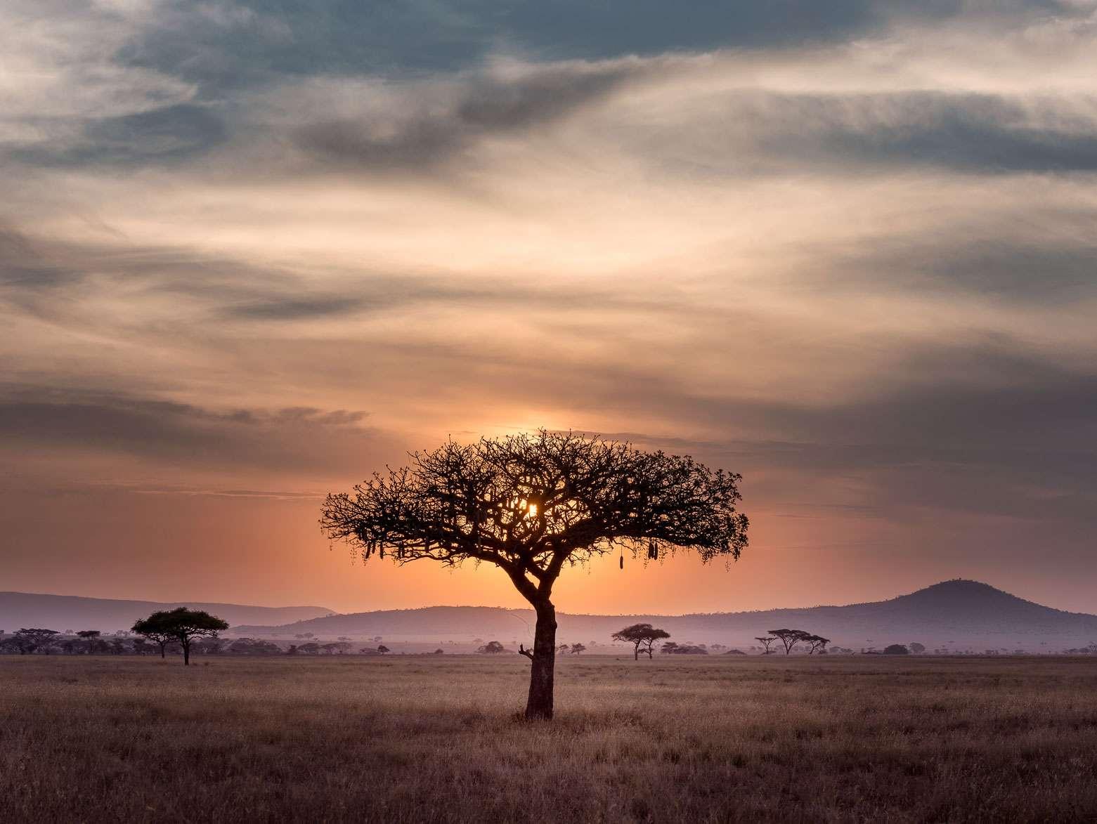 Kontrolní dny v Africe